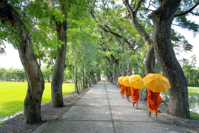 Read more about the article Cos'è veramente un percorso spirituale?